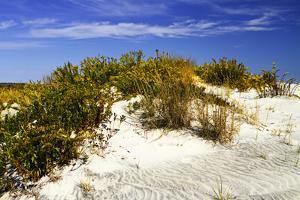 Assateague Beach 1 by Alan Hausenflock