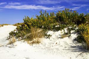 Assateague Beach 2 by Alan Hausenflock