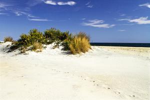 Assateague Beach 3 by Alan Hausenflock