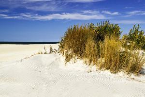 Assateague Beach 4 by Alan Hausenflock