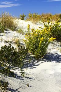 Assateague Beach 6 by Alan Hausenflock