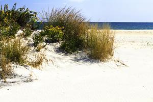 Assateague Beach 7 by Alan Hausenflock