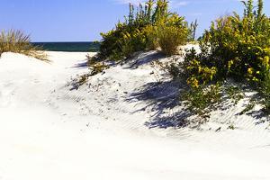 Assateague Beach 8 by Alan Hausenflock