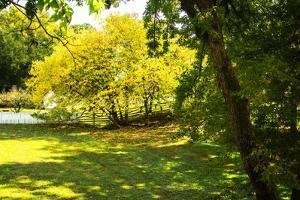 Backyard Color I by Alan Hausenflock