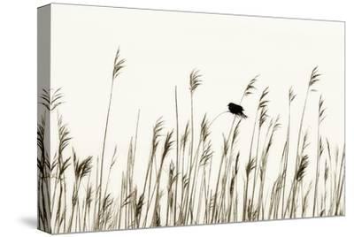 Bird in the Grass 1