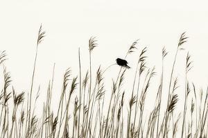 Bird in the Grass 1 by Alan Hausenflock