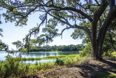 Bradley Creek II by Alan Hausenflock
