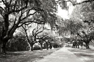 Charleston Oaks 10 by Alan Hausenflock