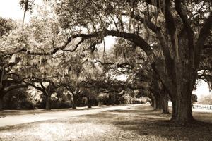 Charleston Oaks 9 Sepia by Alan Hausenflock