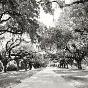 Charleston Oaks Sq X by Alan Hausenflock