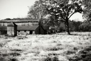 Fallow Fields II by Alan Hausenflock