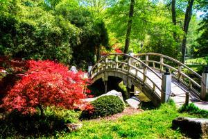 Japanese Garden IV by Alan Hausenflock