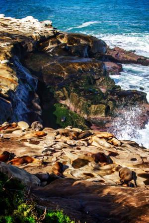 La Jolla Sea Lions I by Alan Hausenflock