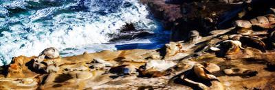 La Jolla Sea Lions II by Alan Hausenflock