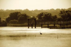 Lagoon II by Alan Hausenflock