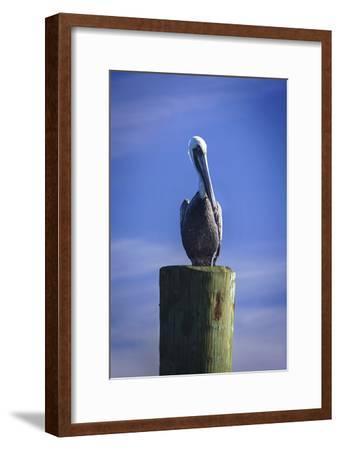 Mr. Pelican I