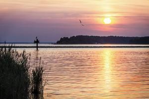 Ospreys at Sunset by Alan Hausenflock