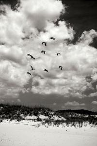 Pelicans over Dunes V BW by Alan Hausenflock