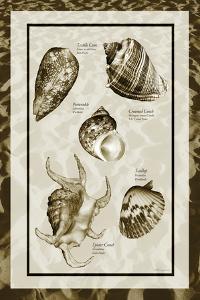 Sand & Shells I by Alan Hausenflock