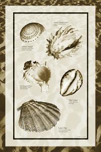 Sand & Shells II by Alan Hausenflock