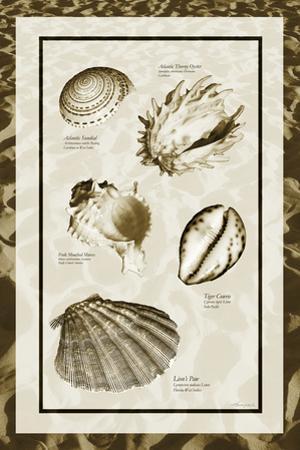 Sand & Shells II