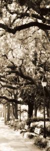 Savannah in Sepia I by Alan Hausenflock