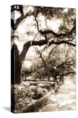 Savannah Sidewalk Sepia II