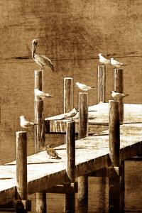 Sea Birds I by Alan Hausenflock