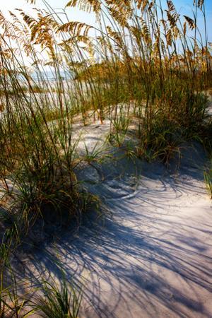Sea Oats & Shadow I by Alan Hausenflock
