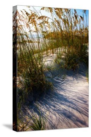 Sea Oats & Shadow I