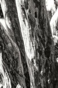 Shedded Bark II by Alan Hausenflock