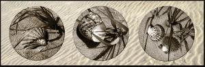 Shells by Alan Hausenflock