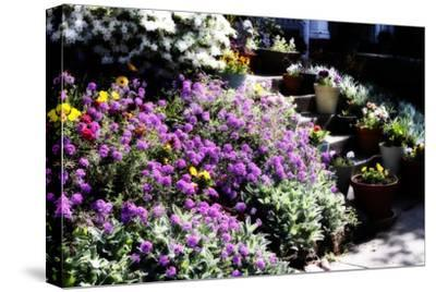 Sidewalk Spring I