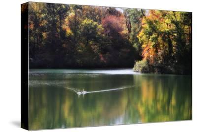 Swans on the Lake I