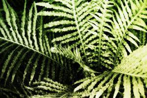 Tropical Foliage II by Alan Hausenflock