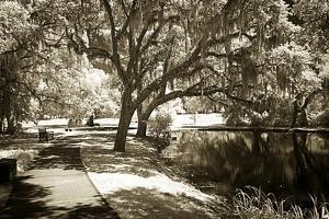 Walker's Pond I by Alan Hausenflock