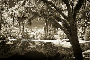 Walker's Pond II by Alan Hausenflock