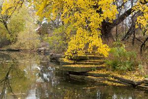 Alfred Caldwell Lily Pond in Chicago's Lincoln Park Area by Alan Klehr