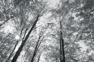 Autumn Forest III by Alan Majchrowicz