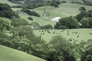 Marin California Ranch by Alan Majchrowicz