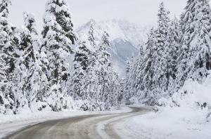 Mount Baker Highway I by Alan Majchrowicz