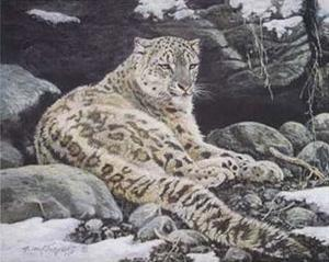 Awake Snow Leopard by Alan Sakhavarz