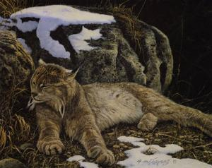 Time to Rest Lynx by Alan Sakhavarz