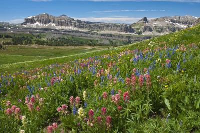 Alaska Basin Wildflower Meadow, Caribou -Targhee Nf, WYoming-Howie Garber-Photographic Print