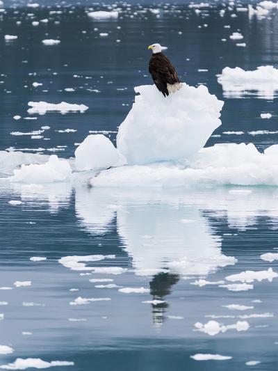 Alaska, Glacier Bay National Park. Bald Eagle on Iceberg-Jaynes Gallery-Photographic Print