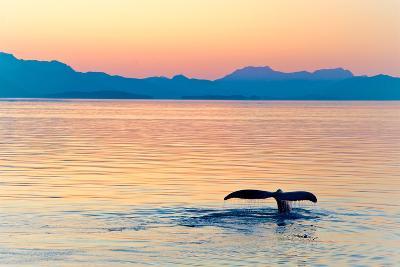 Alaska Whale Tail Sunset-tonyzhao120-Photographic Print