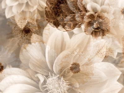 A Floral Montage from Dahlias in Monotone Colors