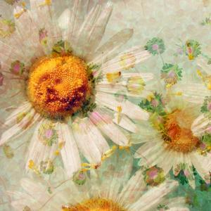A Floral Montage of a Wild Daisy and Blossoms in Gentle Colors by Alaya Gadeh