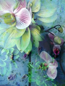 A Floral Montage of Dahlia and Orchid by Alaya Gadeh