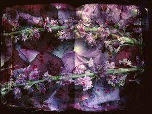 A Floral Montage on an Open Book by Alaya Gadeh